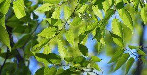Bomen filteren de buitenlucht