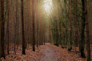 Buitenlucht filteren met bomen zorgt voor een vermindering van te hoge concentraties fijnstof, stikstof en co2.