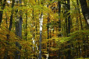 Bomen zijn een ideale luchtreiniger voor het filteren van stikstofdioxide, fijnstof en CO2.