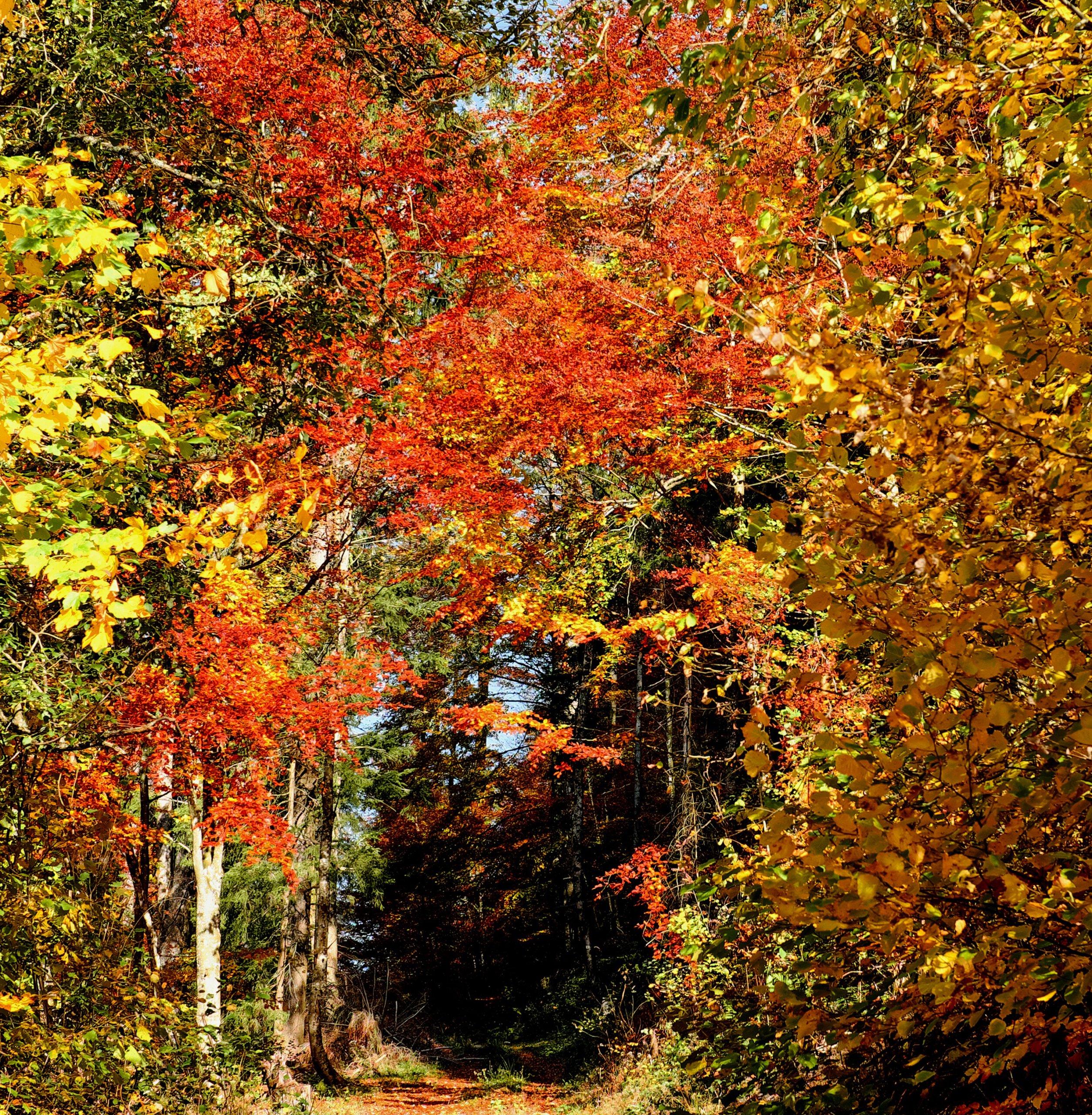 Stikstofdioxe, NO2, ultrafijnstof en CO2 uit de lucht filteren gaat ideaal met bomen.