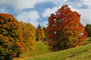 Stikstofdioxide uit de buitenlucht filteren gaat ideaal met bomen. De bomen nemen de vuile stoffen uit de buitenlucht op en verbeteren de luchtkwaliteit.