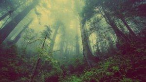 Vervuilde buitenlucht is ongezond voor mens en dier. De natuur heeft zelf een oplossing bedacht doordat blaadjes en naalden aan bomen werken als buitenfilters. Ze filteren dus de buitenlucht.