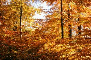 De vervuilde buitenlucht filteren met bomen werkt ideaal. Bladeren nemen verontreinigende stoffen op via de huidmondjes.