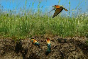 Vogels in de vieze buitenlucht