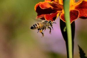 Bijen zoeken stuifmeel. Luchtvervuiling belemmert die zoektocht.