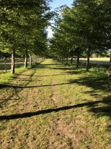 Schone Lucht Project - Viridi Air – Landgoed De Beylevelden (13)