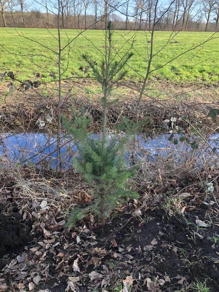 bomen planten voor schone lucht